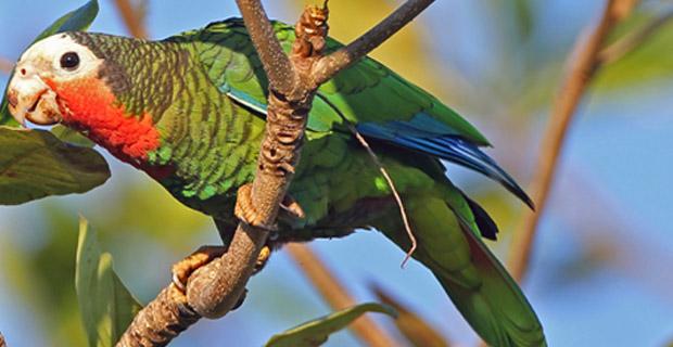 Bird Watching in Zapata Cuba