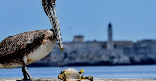 Nature Trips to Cuba