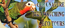 Website Cuba Nature & Bird Watching Tours by Authentic Cuba Travel®.